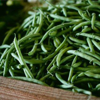 Haricots verts cueillis à la main