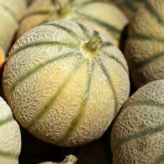 Melon calibre 15