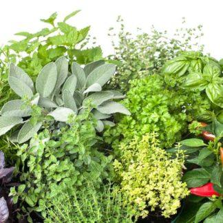 Herbes Aromatiques et Condiments